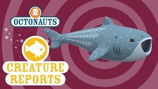 getlinkyoutube.com-Octonauts: Creature Report - Whale Shark