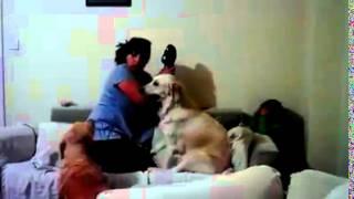 getlinkyoutube.com-كلب يدافع عن طفل امه بتضربه مش هتصدق
