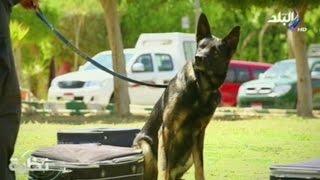 getlinkyoutube.com-شاهد...حمدي رزق في مهمة خاصة بمعسكر تدريب كلاب الأمن و الحراسة