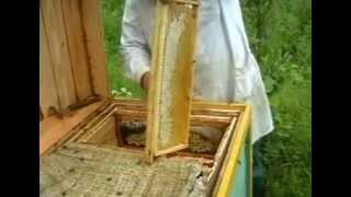 getlinkyoutube.com-Пчеловодство в Псковской области