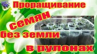 getlinkyoutube.com-Проращивание семян без земли (в рулонах) Часть 1-я