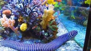 getlinkyoutube.com-Dormero Rotes Ross June 2013 Hotel Reef Aquarium