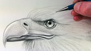 getlinkyoutube.com-How to Draw an Eagle Head