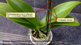 getlinkyoutube.com-Как отрезать цветонос у орхидеи. Мой метод!