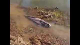 getlinkyoutube.com-Strange Creatures 2012!! Amazing Video