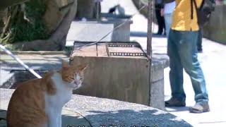 getlinkyoutube.com-公共電視 我們的島─真假貓天堂