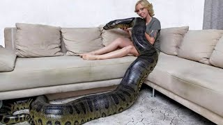 getlinkyoutube.com-ANACONDA GIGANTE - Algumas Mulheres Com Suas Anacondas