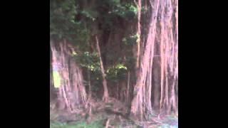 getlinkyoutube.com-Ngentot di bawah pohon enaknya