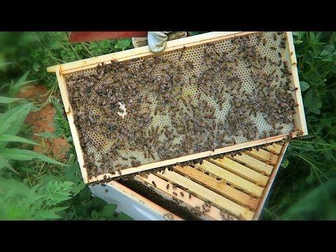 My Terrible Beekeeping Mistake
