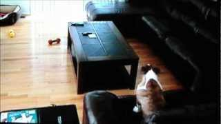 getlinkyoutube.com-Dog Home Alone