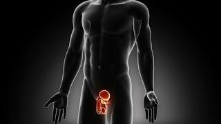 getlinkyoutube.com-Pelvic Floor Muscle Training in Males: Practical Applications