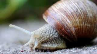 getlinkyoutube.com-True Facts About The Land Snail