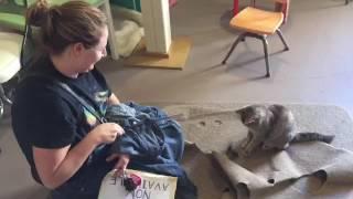 Tabby's Catfe