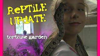 getlinkyoutube.com-Reptile Update - Tortoise Garden