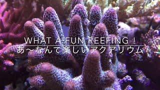 getlinkyoutube.com-Mar.20.2016 Tarafuku Reef Aquarium (ver2)