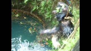 getlinkyoutube.com-SNAKE CATCHERS IN KERALA (  CATCHING PORCUPINE )our help 9249410644