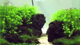 getlinkyoutube.com-Einrichten eines Aquascaping Aquariums