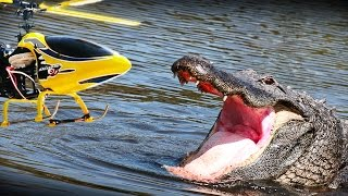 getlinkyoutube.com-RC heli vs. Alligator - what happens? NOT a prank but an experiment!!
