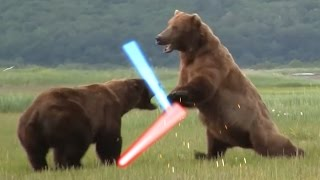 getlinkyoutube.com-STAR WARS BEARS - LIGHTSABER BATTLE