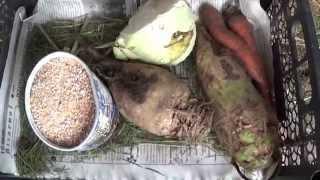 Зимний корм для кроликов
