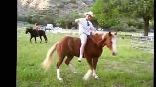 getlinkyoutube.com-2013 Funniest Horse Video Contest Winners