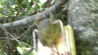 getlinkyoutube.com-squirrel trapping