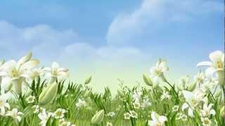 getlinkyoutube.com-خلفية فيديو للمونتاج - بجودة عالية - زهور