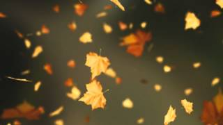 Falling Autumn Leaves Background loop 2 (Read Desc)