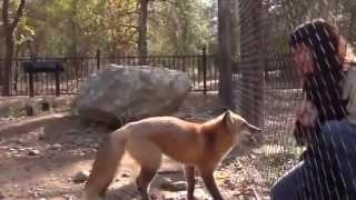 getlinkyoutube.com-اغرب الحيوانات وتصرفاتها ..مشاهد عجيبه