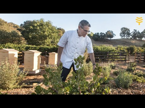 Farm to table, wine, olive oil and beekeeping at Jordan Winery in California