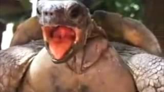 getlinkyoutube.com-Coldplay turtle