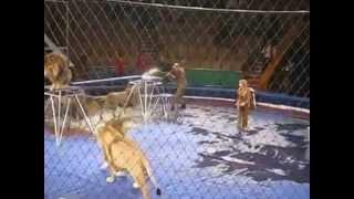 getlinkyoutube.com-衝撃映像2013/サーカスのトレーナーがライオンに・・・。.mp4
