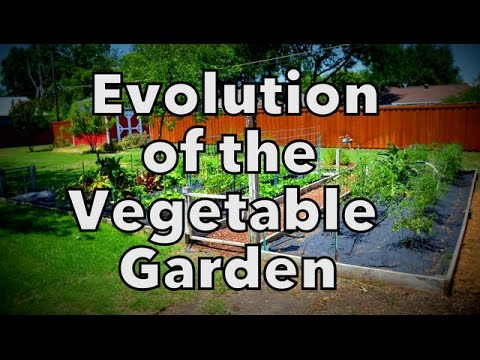 The Evolution of our Vegetable Garden