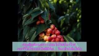 getlinkyoutube.com-ลุยไร่เชอร์รี่ 06/10/12