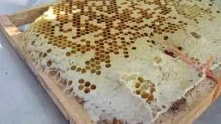 getlinkyoutube.com-KĨ THUẬT lấy mật ong, nuôi ong , bắt ong chúa, , trên VTV2