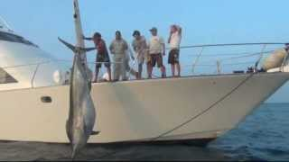 getlinkyoutube.com-1038lb Black Marlin Caught, Nov 23 2011 - Little Audrey Game Fishing Charters