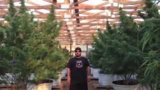 "getlinkyoutube.com-OMMPgrower Motivational Marijuana #7- Face your Fear ""100 pound outdoor"""