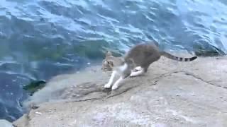 getlinkyoutube.com-سبحان الله الرزاق قطة تصطاد سمكة من البحر