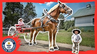 getlinkyoutube.com-World's Tallest Horse - Meet The Record Breakers - Guinness World Records