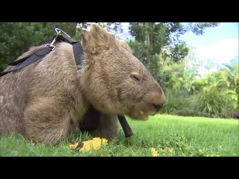 Getting up close and personal with Australia's wildflife