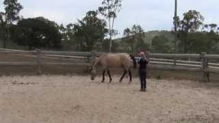 getlinkyoutube.com-How to teach a horse to lay down naturally (without ropes) ~ Tutorial!