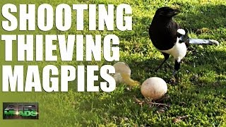 getlinkyoutube.com-AirHeads - Shooting Thieving Magpies (episode 6)