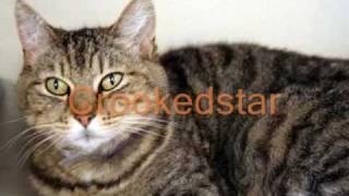 getlinkyoutube.com-Warrior cats of Starclan