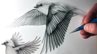 getlinkyoutube.com-How to Draw Birds Flying