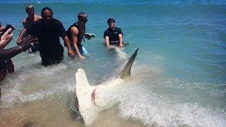 getlinkyoutube.com-Fort Lauderdale Florida Giant 13 Foot Hammerhead Shark! (ORIGINAL VIDEO)