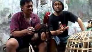 getlinkyoutube.com-rono rene protv pasar ayam jago1