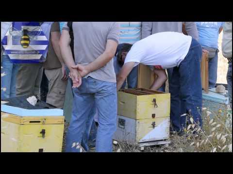 Σεμινάρια μελισσοκομίας - Πρακτικό μάθημα