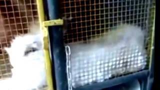 getlinkyoutube.com-Ternak Kelinci - Ini Dia Tempat Budidaya Ternak Kelinci Yang Maknyus