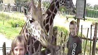 getlinkyoutube.com-Giraffe hits young boy at the ZOO