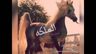 getlinkyoutube.com-شيله بنت الشرف